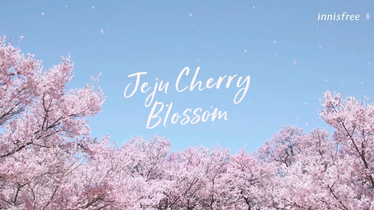 NEW Jeju Cherry Blossom Tone-up Cream - Coming Soon.