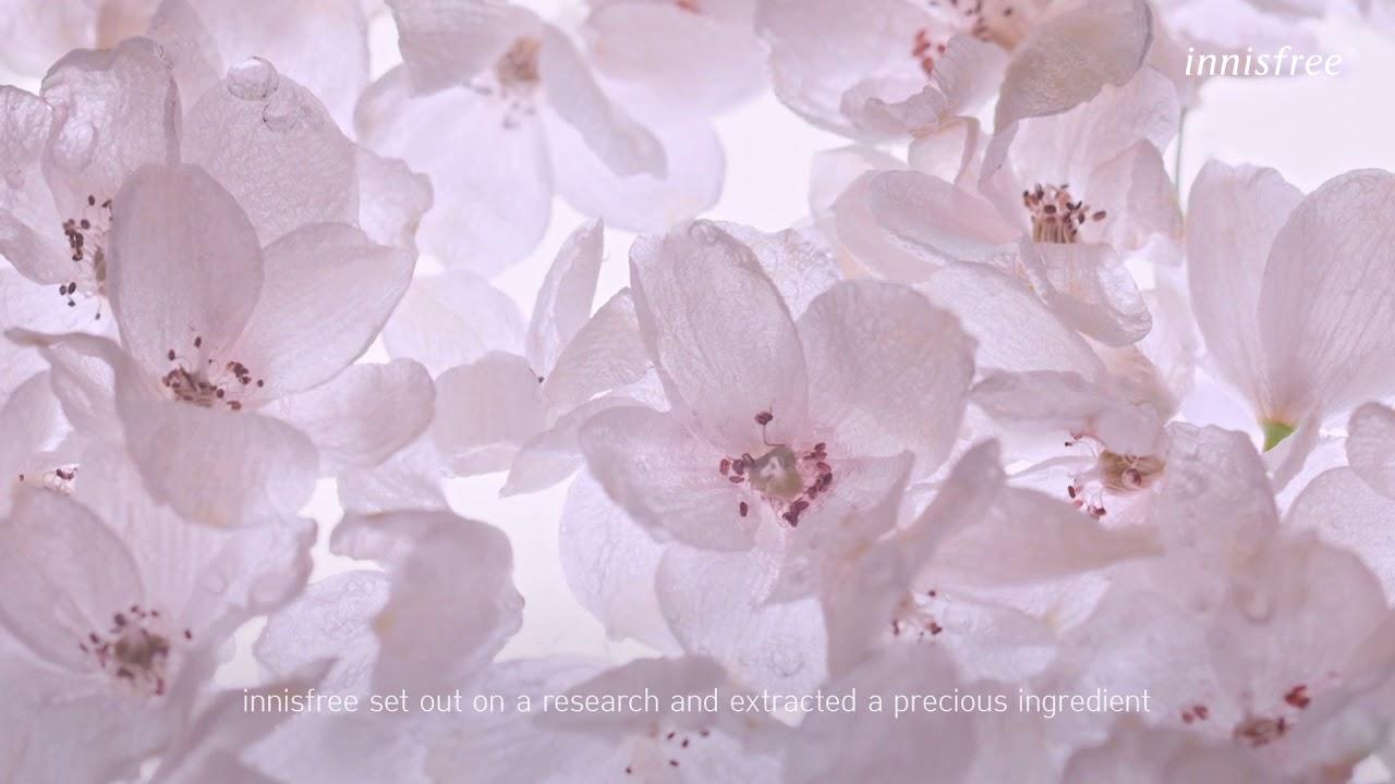 2019 NEW Jeju Cherry Blossom Tone-up Cream